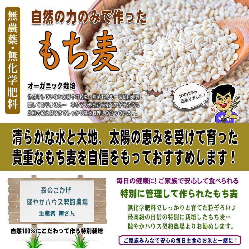 森のこかげ もち麦 500g  無農薬 特別栽培|epicot|03