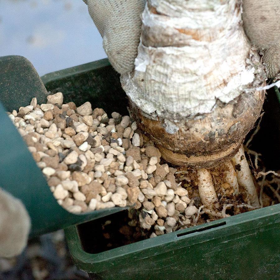多肉植物 土 培養土 サボテン コーデックス 塊根 エケベリア アガベ ガガイモ 観葉植物 植え替え 賢者の土 erioquest 06