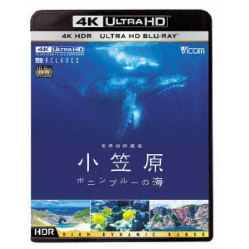 世界自然遺産 小笠原 〜ボニンブルーの海〜 祝日 UltraHD《UHDBD ※専用プレーヤーが必要です》 Blu-ray 期間限定