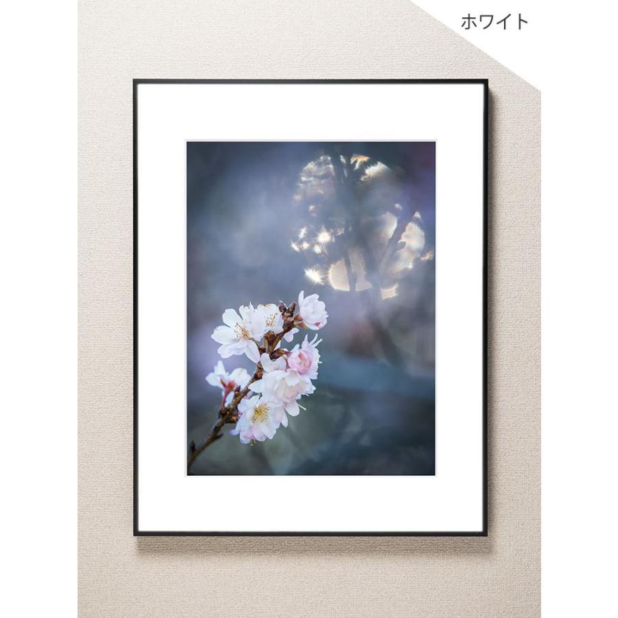 【片岡正一郎】オリジナルプリント「桜」No.1 A3額付き exa-photo 02