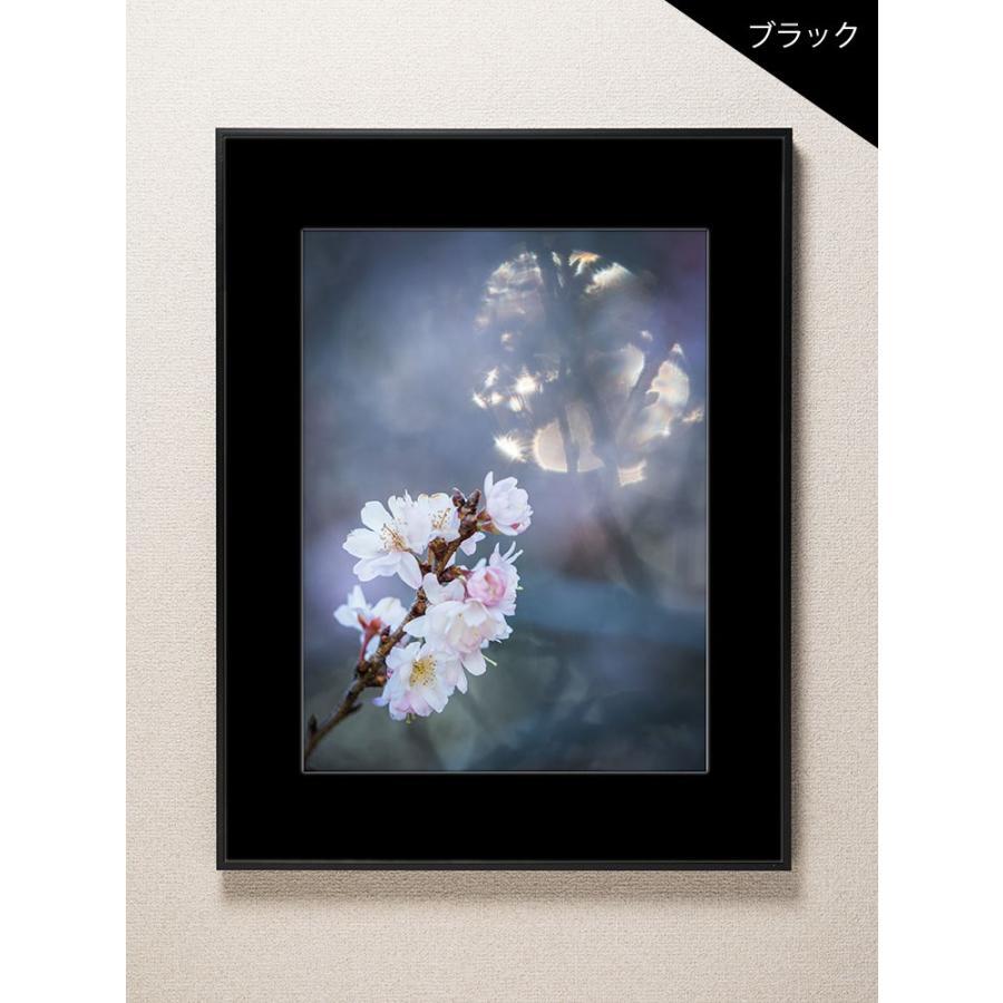 【片岡正一郎】オリジナルプリント「桜」No.1 A3額付き exa-photo 03