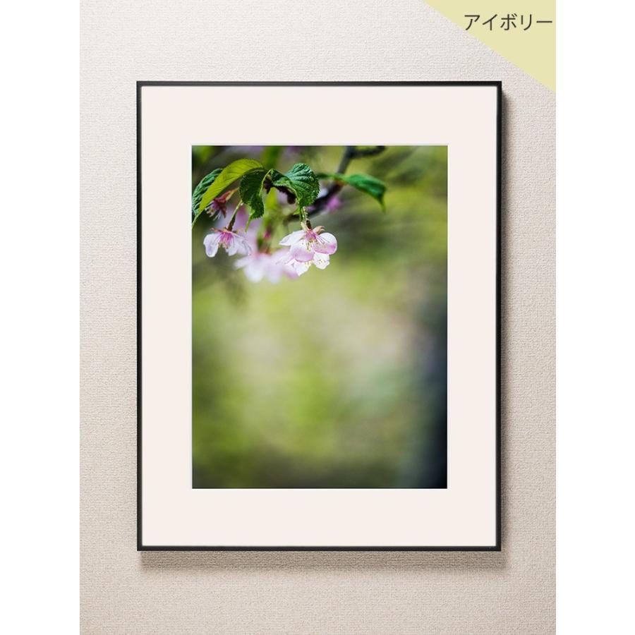 【片岡正一郎】オリジナルプリント「桜」No.2 A3額付き|exa-photo