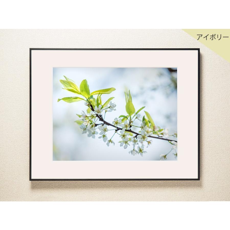 【片岡正一郎】オリジナルプリント「桜」No.3 A3額付き|exa-photo