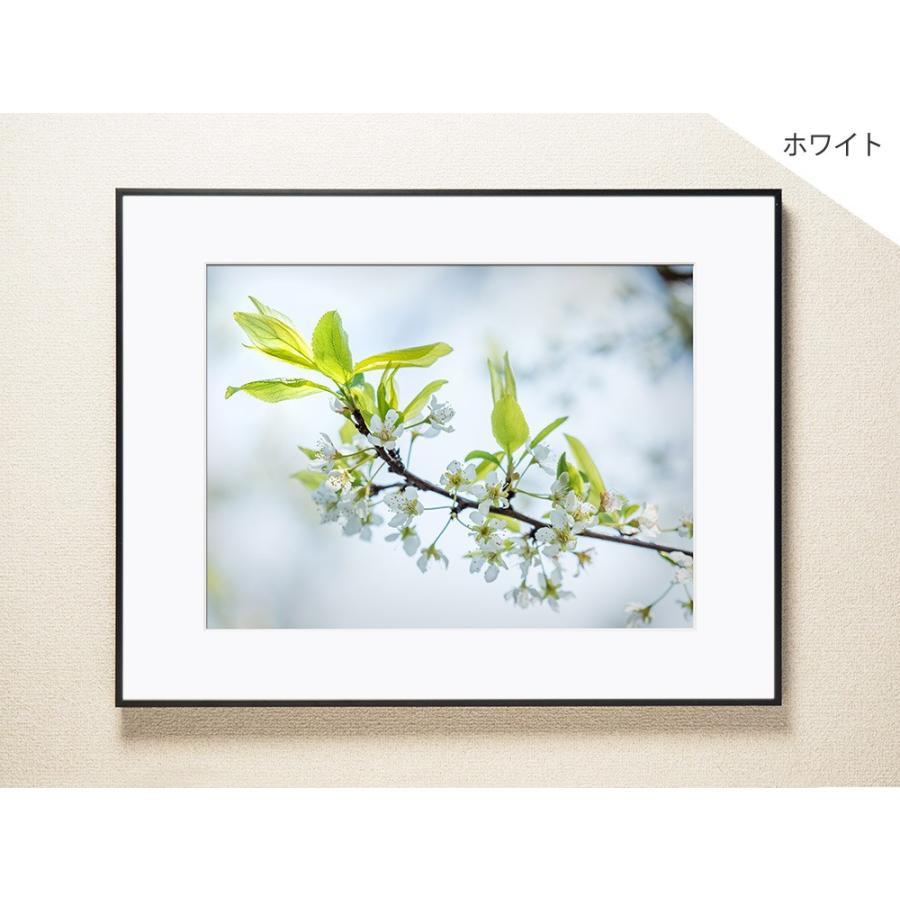 【片岡正一郎】オリジナルプリント「桜」No.3 A3額付き|exa-photo|02