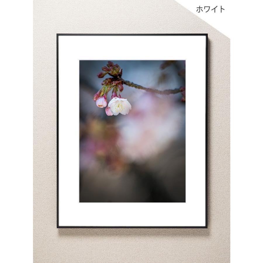 【片岡正一郎】オリジナルプリント「桜」No.5 A3額付き exa-photo 02
