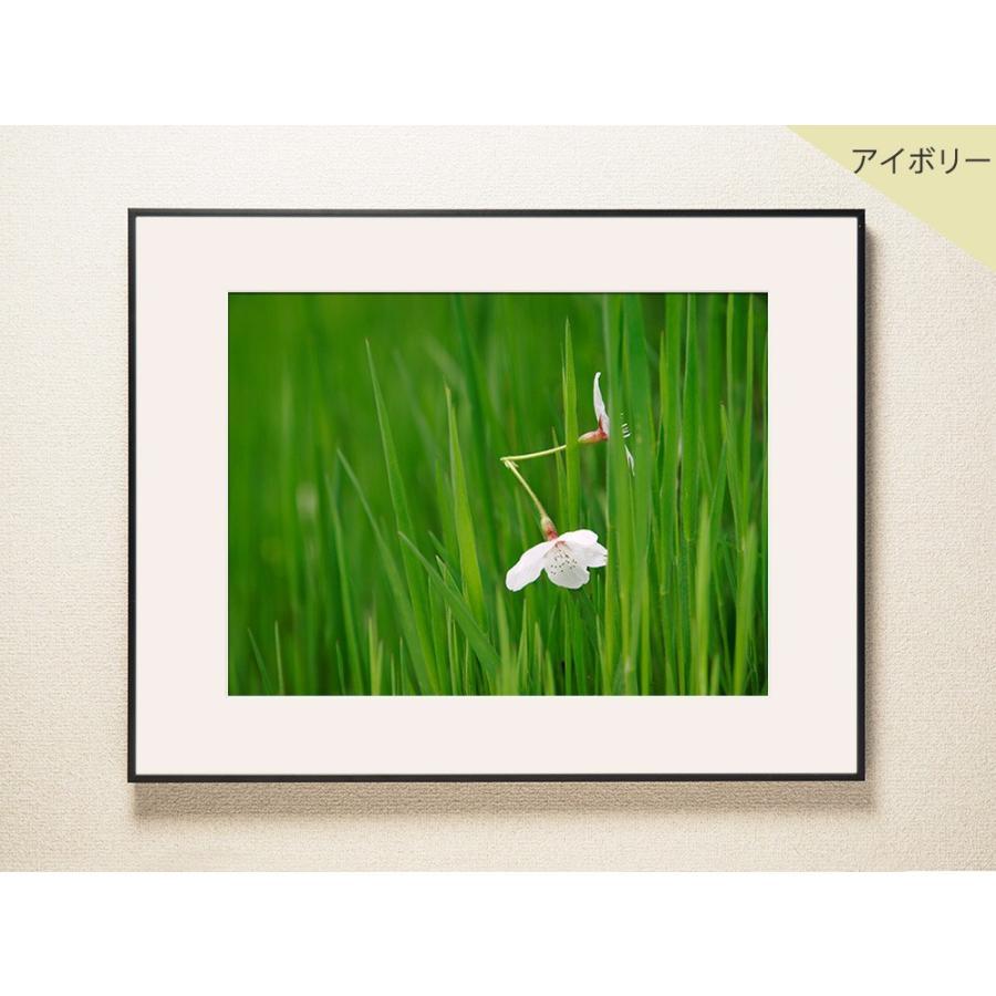 【片岡正一郎】オリジナルプリント「桜」No.6 A3額付き|exa-photo