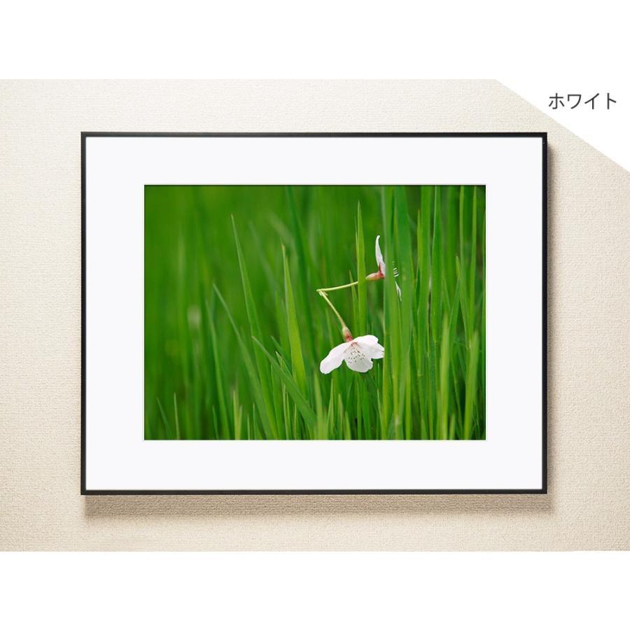 【片岡正一郎】オリジナルプリント「桜」No.6 A3額付き|exa-photo|02