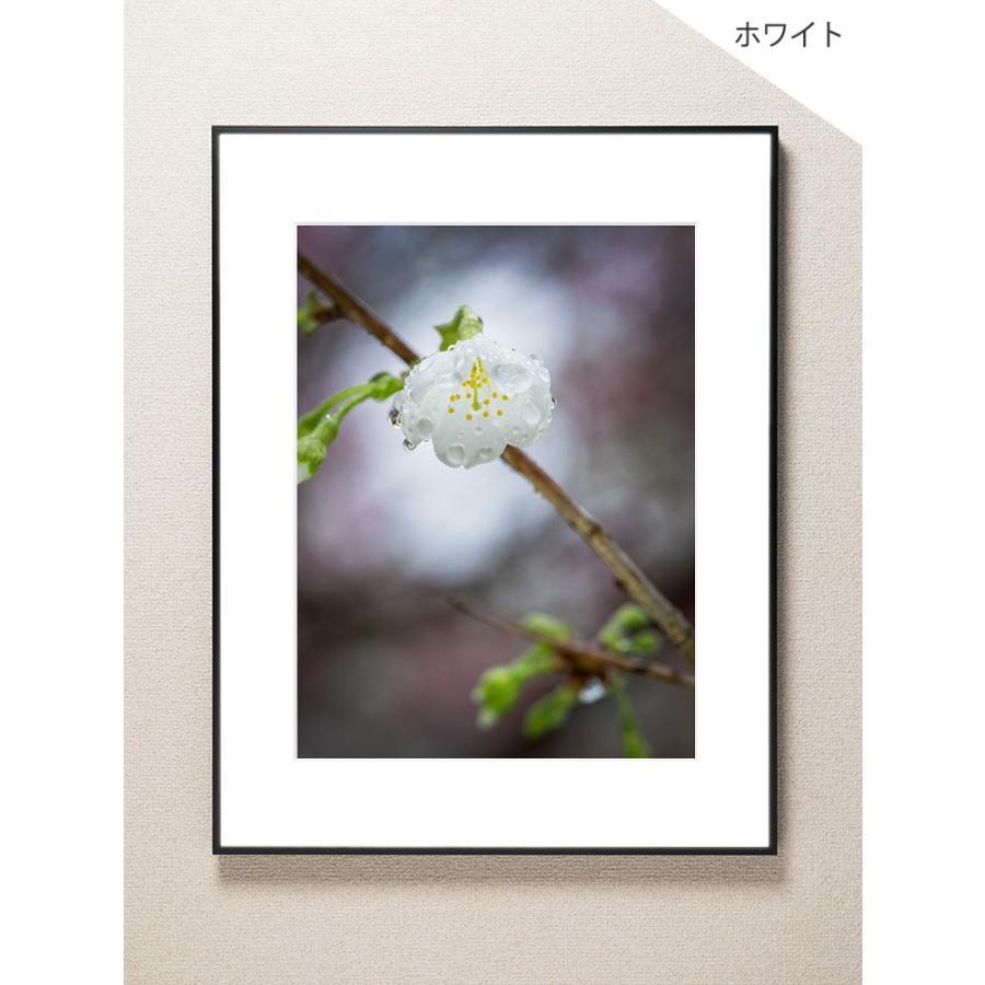 【片岡正一郎】オリジナルプリント「桜」No.8 A3額付き|exa-photo|02
