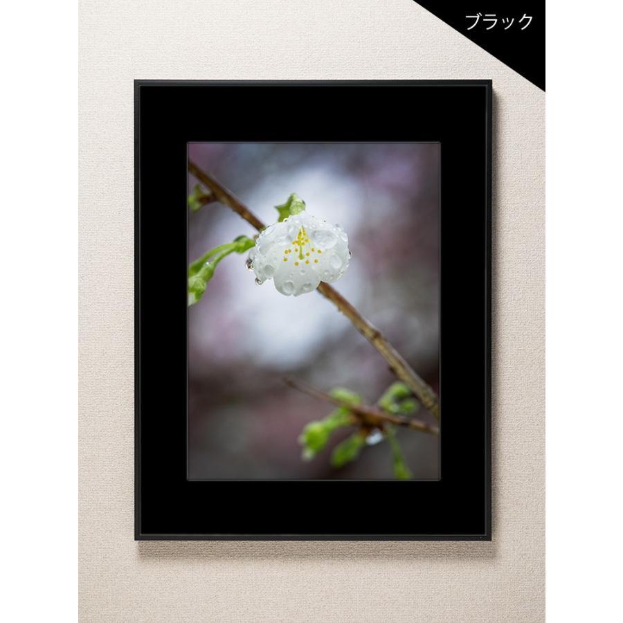 【片岡正一郎】オリジナルプリント「桜」No.8 A3額付き|exa-photo|03