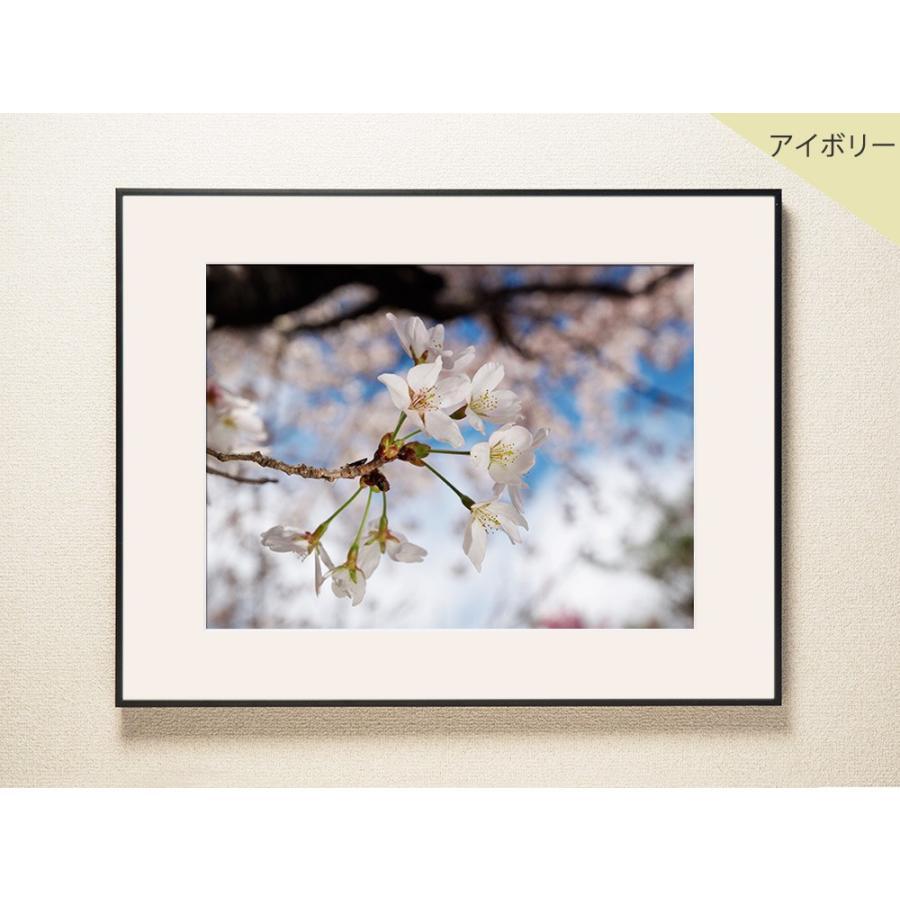 【片岡正一郎】オリジナルプリント「桜」No.9 A3額付き|exa-photo