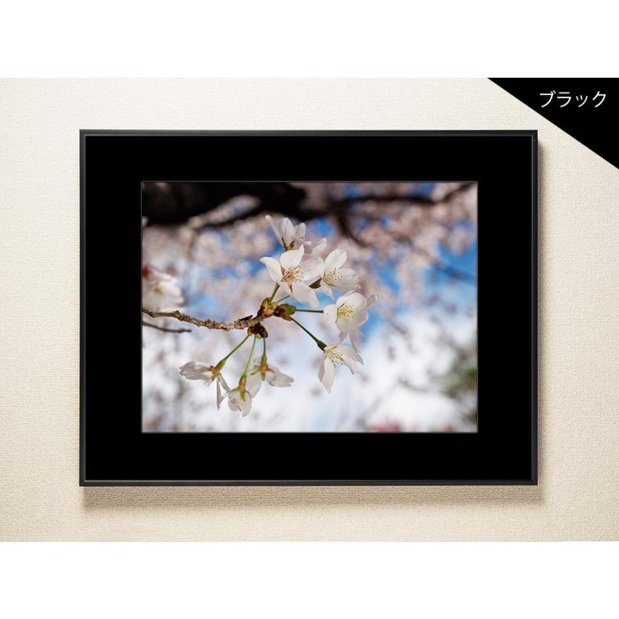 【片岡正一郎】オリジナルプリント「桜」No.9 A3額付き|exa-photo|03
