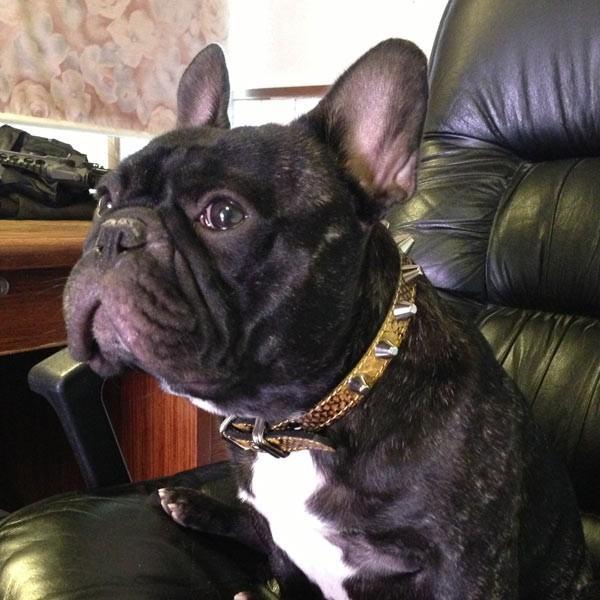 首輪 中型犬用 スタッズ 革 2cm幅:2cm Type 002(14mm鋲)【色は10色以上から、サイズは1cm単位でオーダー】 extraheavyy 04