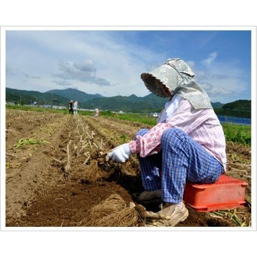 2020年度産 業務用 九州産乾燥にんにくチップ 1kg 国産ニンニク|f-oishii|03