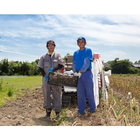 2020年度産 業務用 九州産乾燥にんにくチップ 1kg 国産ニンニク|f-oishii|07