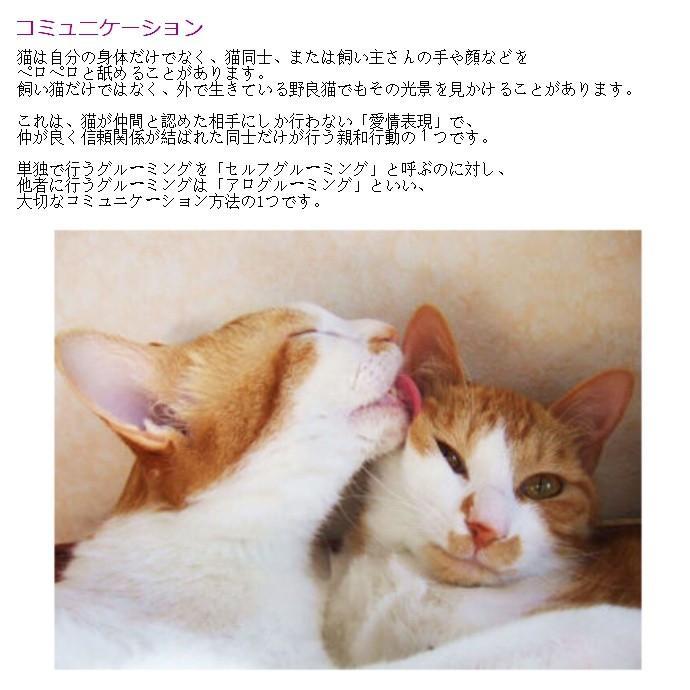 ワタオカ ねこじゃすり ピンク (99800011) familypet 12