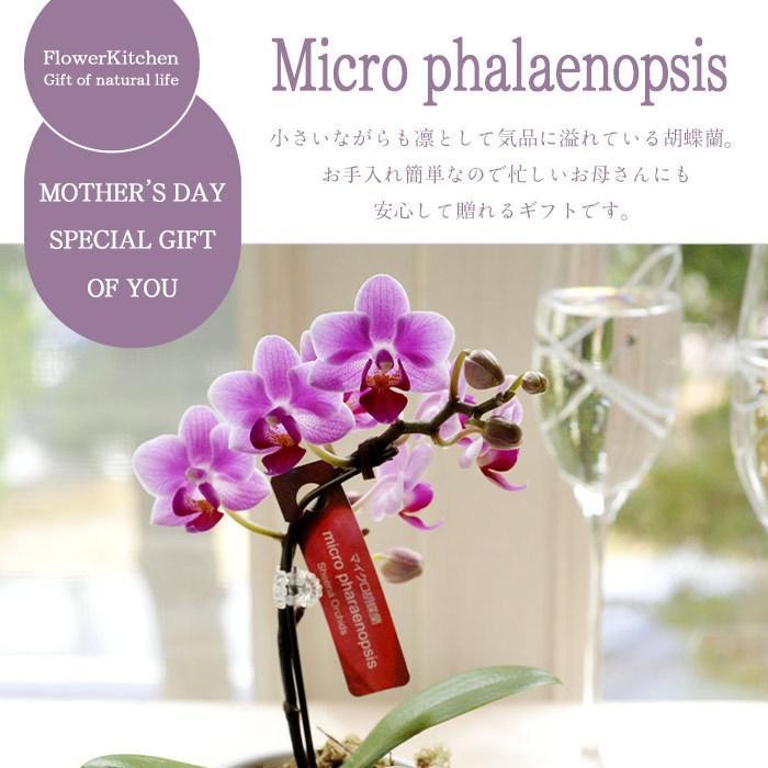 完売御礼 母の日 ギフト 2021 花 母の日選べる季節の花鉢ギフト 鉢花 マイクロ胡蝶蘭 ピンクバラ花鉢 FKHH|fkjiyugaoka|02