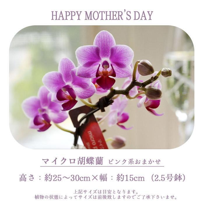 完売御礼 母の日 ギフト 2021 花 母の日選べる季節の花鉢ギフト 鉢花 マイクロ胡蝶蘭 ピンクバラ花鉢 FKHH|fkjiyugaoka|03