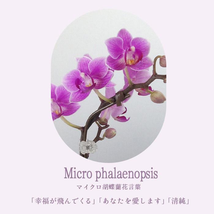 完売御礼 母の日 ギフト 2021 花 母の日選べる季節の花鉢ギフト 鉢花 マイクロ胡蝶蘭 ピンクバラ花鉢 FKHH|fkjiyugaoka|05