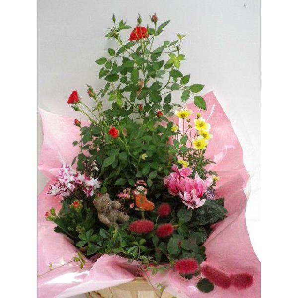 寄せ鉢|flower-8729