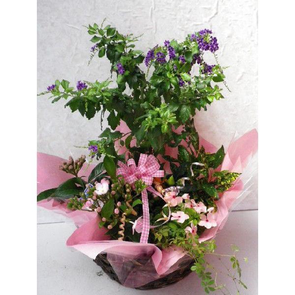 寄せ鉢|flower-8729|02