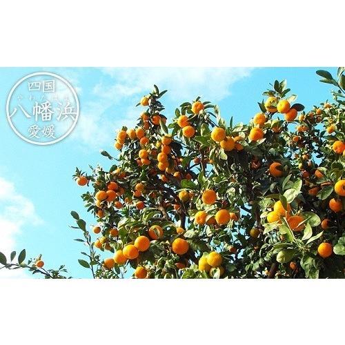 農ぷらす媛一柑橘ジュース2本セット 780ml×2本セット(甘平・せとか)   0038 : 愛媛県産・柑橘ジュース fmarushe535 02
