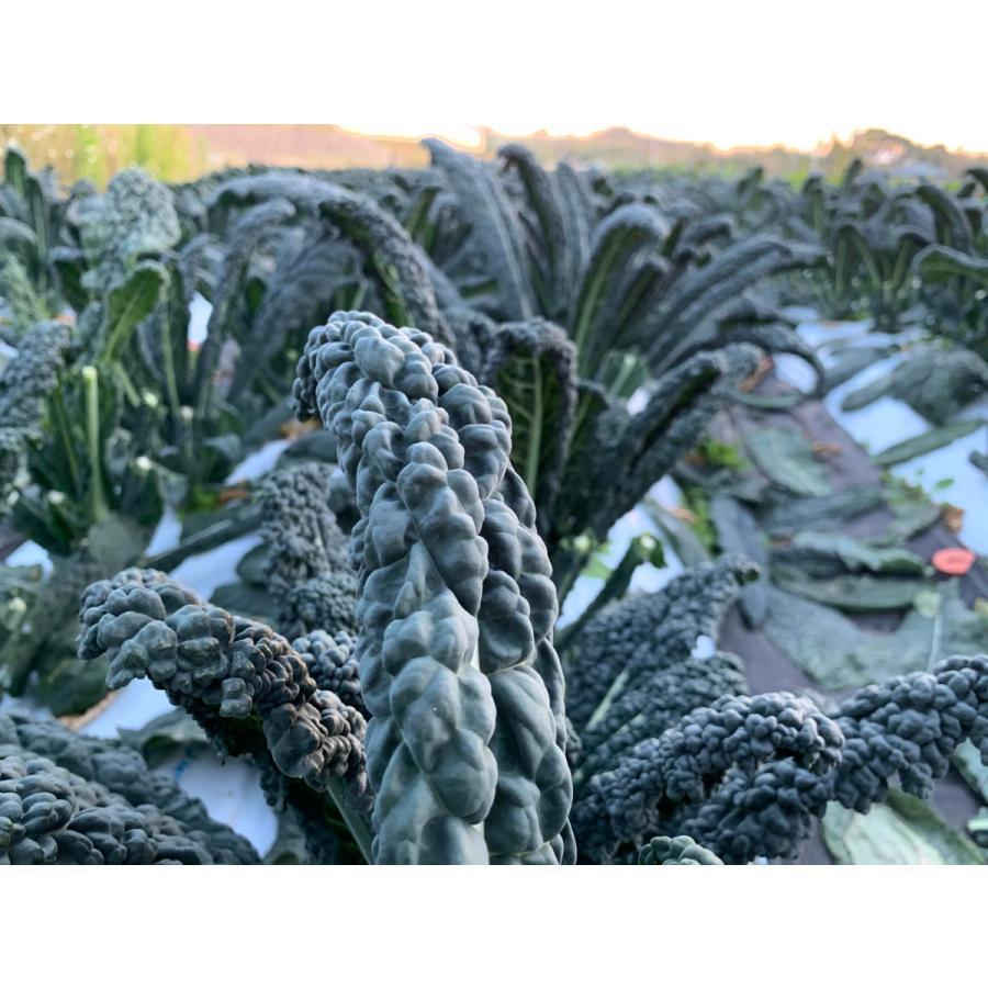 フレッシュグループ淡路島の香るハーブと彩り野菜セット 季節の12〜14種の厳選こだわり詰合わせ|freshherb|11