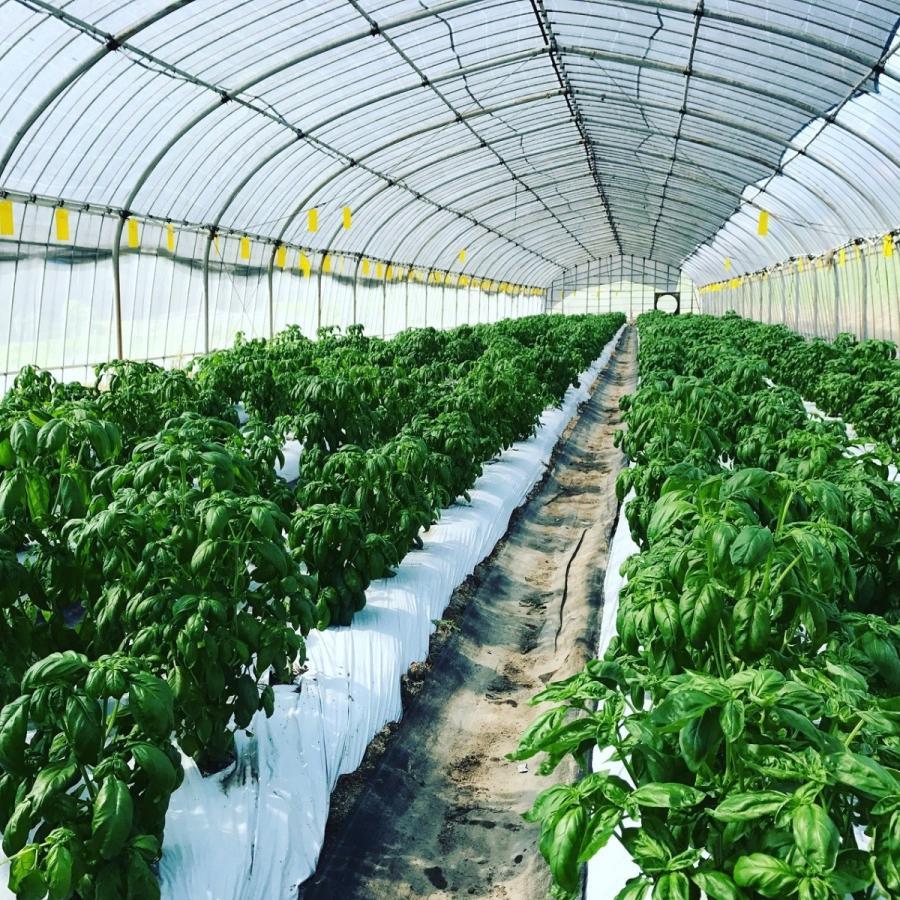 フレッシュグループ淡路島の香るハーブと彩り野菜セット 季節の12〜14種の厳選こだわり詰合わせ|freshherb|06