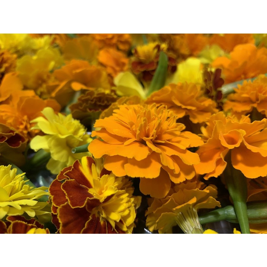 フレッシュグループ淡路島の香るハーブと彩り野菜セット 季節の12〜14種の厳選こだわり詰合わせ|freshherb|07