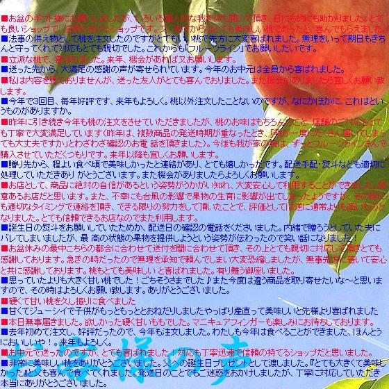 桃 山梨 お中元ギフト フルーツ 特産品 白鳳 白桃 黄金桃 硬い桃 特秀 1kg 送料無料 一部地域を除く|fruits-line|11