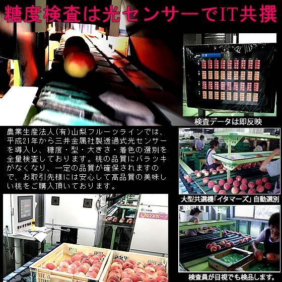 桃 山梨 お中元ギフト フルーツ 特産品 白鳳 白桃 黄金桃 硬い桃 特秀 1kg 送料無料 一部地域を除く|fruits-line|12
