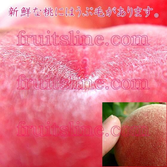 桃 山梨 お中元ギフト フルーツ 特産品 白鳳 白桃 黄金桃 硬い桃 特秀 1kg 送料無料 一部地域を除く|fruits-line|15