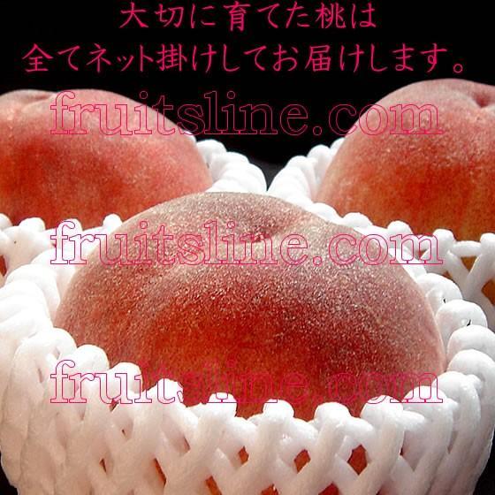 桃 山梨 お中元ギフト フルーツ 特産品 白鳳 白桃 黄金桃 硬い桃 特秀 1kg 送料無料 一部地域を除く|fruits-line|18