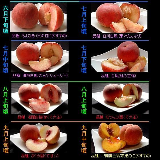 桃 山梨 お中元ギフト フルーツ 特産品 白鳳 白桃 黄金桃 硬い桃 特秀 1kg 送料無料 一部地域を除く|fruits-line|10