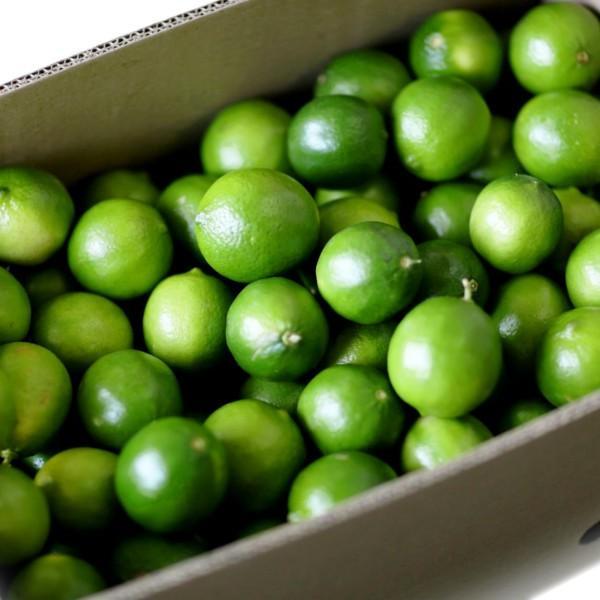 全国送料無料  防ばい剤不使用(メキシコ産ライム 1kg 常温便)ポストハーベスト 農薬、防腐剤不使用 約8〜11個 青果|fs-yokohama|04
