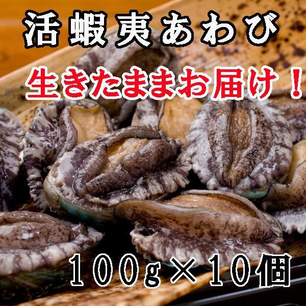 お歳暮 お祝い ギフト お取り寄せグルメ 活蝦夷アワビ Mサイズ 5個入り|fugumaru