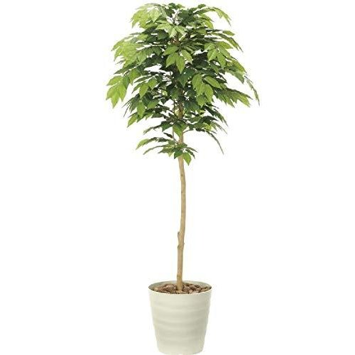 光触媒「V-CAT」を使用人工観葉植物●光触媒 光の楽園 ケヤキ1.6m