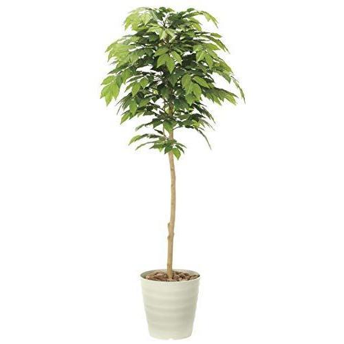造花 観葉植物 「ケヤキ 」 光触媒(空気清浄) インテリアグリーン 鉢植え (G:160cm)