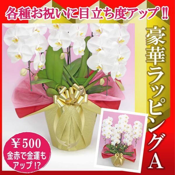 豪華ラッピングAタイプ500円/金赤×ゴージャス赤リボン 単品注文不可 fujimino