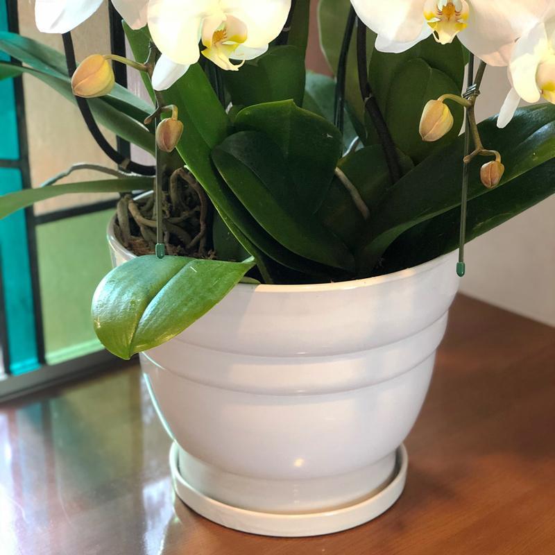 鉢皿 L 受け皿 陶器 直径21cm 高級感ある陶器製【鉢皿のみの購入不可】 fujimino 04