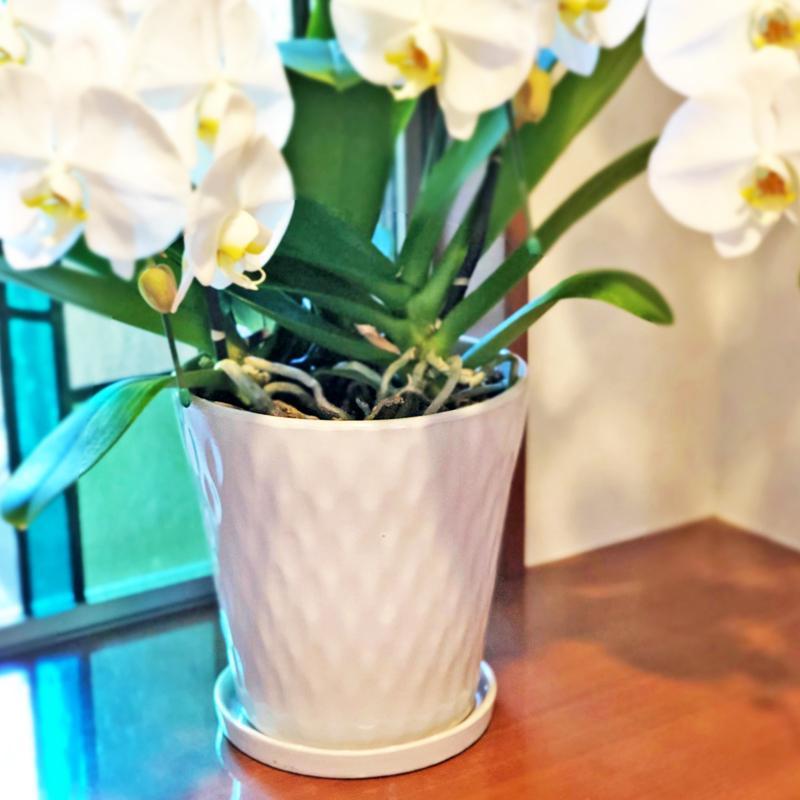鉢皿 M 受け皿 陶器 直径18cm 高級感ある陶器製【鉢皿のみの購入不可】 fujimino 04