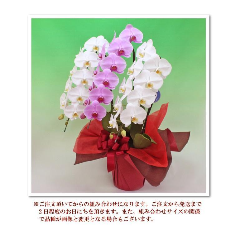 ミックス大輪紅白胡蝶蘭3本立ち2種  胡蝶蘭 お祝い お供え コロナ禍巣ごもりギフト 他にはない紅白カラーが目立ちます<防寒対策>|fujimino|06
