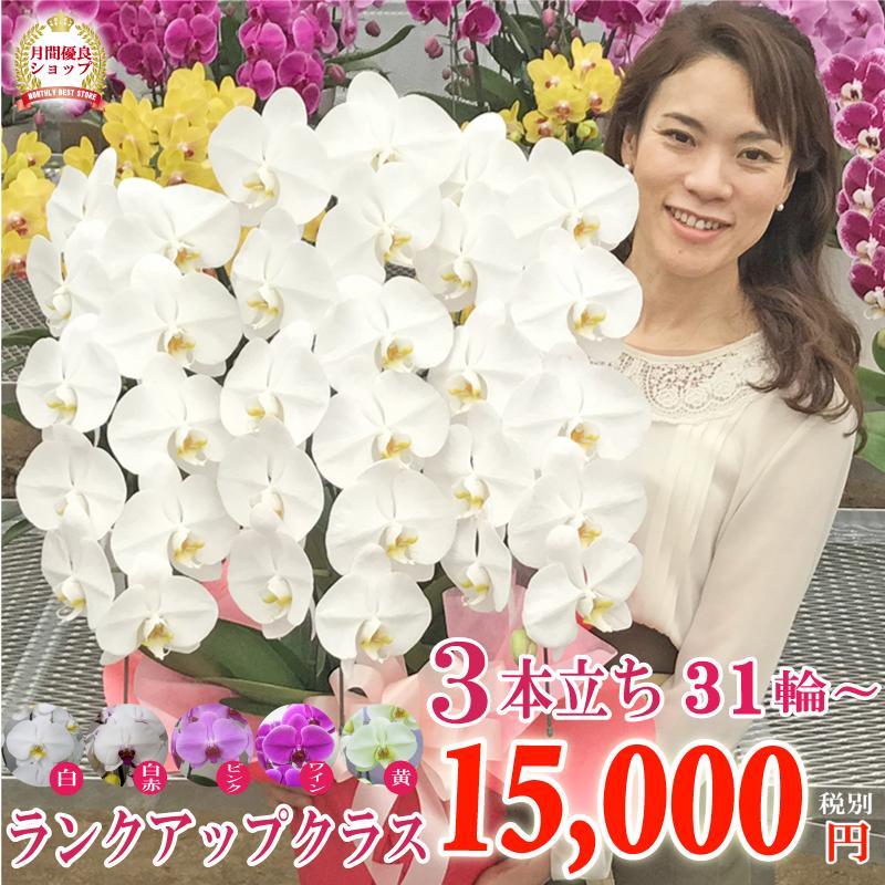 1ランクアップの胡蝶蘭 お祝い お供え コロナ禍巣ごもりギフト 3本立ちスタンダードプラス 選べる5色<全国送料無料>|fujimino