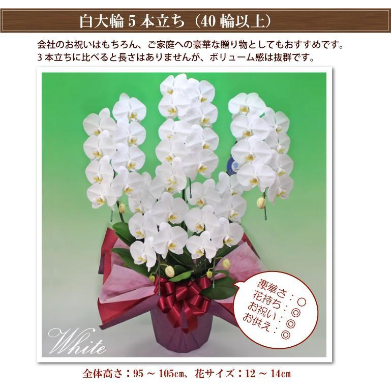 5本立ち40輪コスパ抜群胡蝶蘭 お祝い お供え バレンタインギフト 4色<防寒対策>|fujimino|02