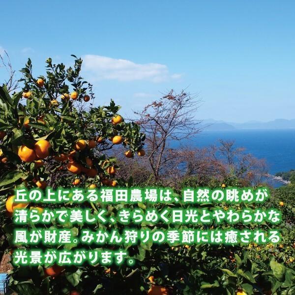 アマビエ みかんジュース ストレート 天草晩柑 九州まるごとしぼり 1本180ml 九州 国産 果汁100%|fukuda-farm|12