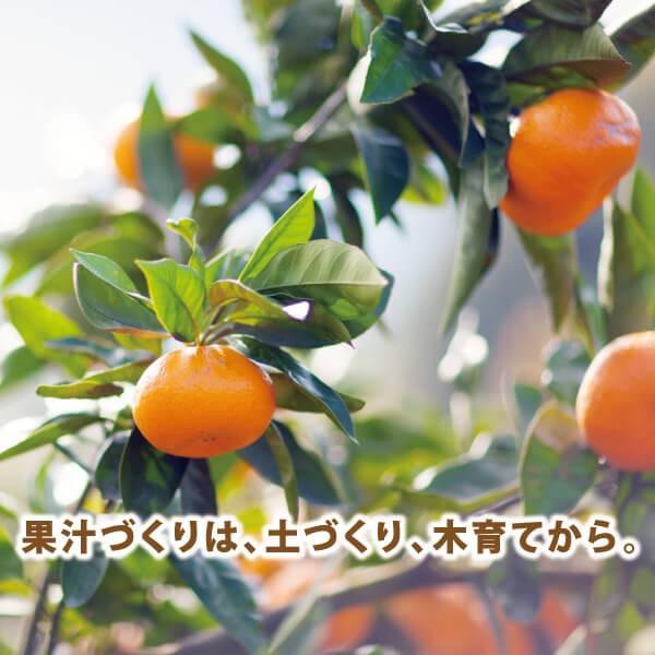みかんジュース ストレート 九州まるごとしぼり 180ml 九州 国産 飲み比べ180ml×8本セット ギフト デコポン 晩柑 fukuda-farm 13