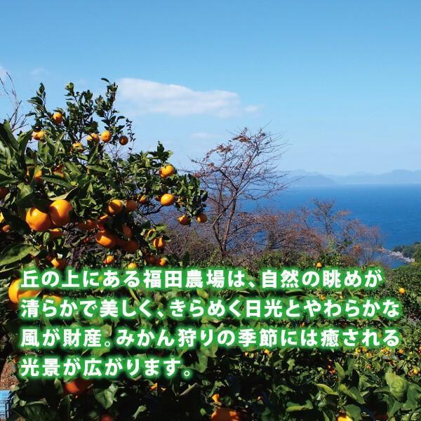 みかんジュース ストレート 九州まるごとしぼり 180ml 九州 国産 飲み比べ180ml×8本セット ギフト デコポン 晩柑 fukuda-farm 16