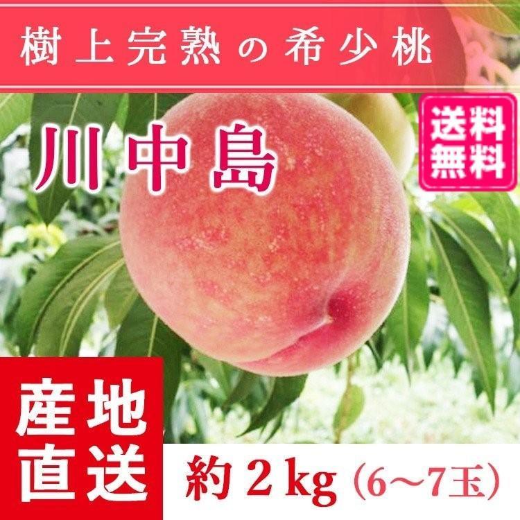 【送料無料 8月下旬〜9月中旬発送予約注文】福島県産の桃 もぎたて完熟川中島 約2kg(6〜7玉) ギフト・贈答用に 阿部農縁 もも モモ|fukufukugenki