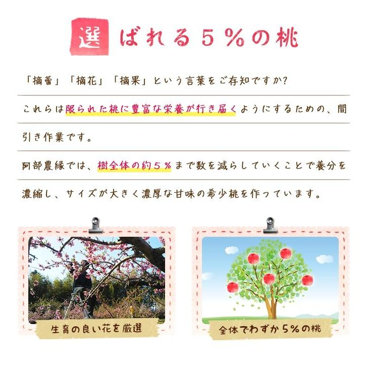 【送料無料 8月下旬〜9月中旬発送予約注文】福島県産の桃 もぎたて完熟川中島 約2kg(8〜9玉) ギフト・贈答用に 阿部農縁 もも モモ|fukufukugenki|03