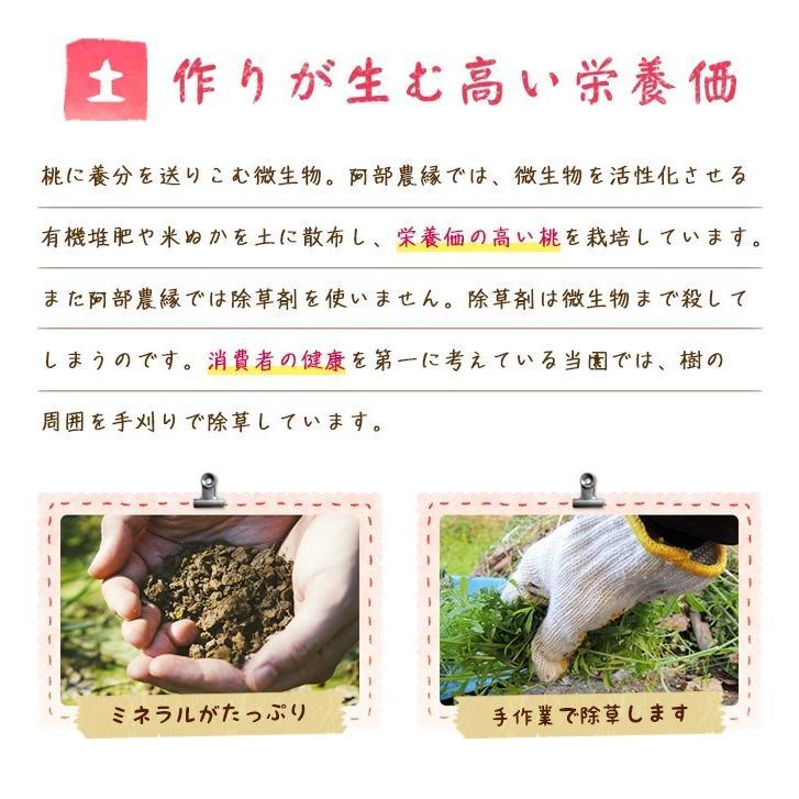 【送料無料 8月下旬〜9月中旬発送予約注文】福島県産の桃 もぎたて完熟川中島 約2kg(8〜9玉) ギフト・贈答用に 阿部農縁 もも モモ|fukufukugenki|05