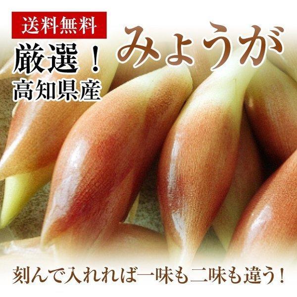 みょうが 約150g入り  高知県産  かほり優しい!【送料込】お試し!|fukui